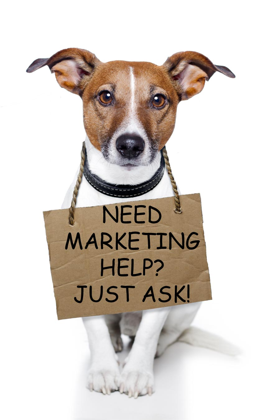 Need amrketing Help? Just ask